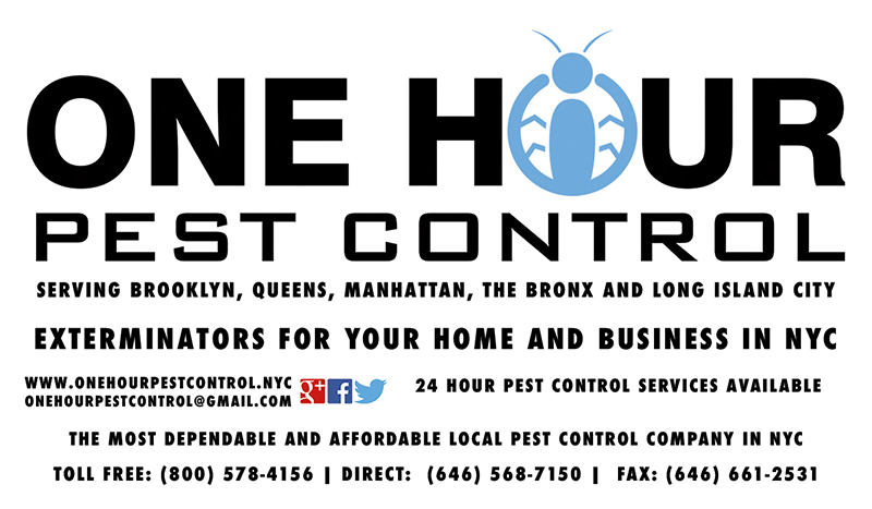 Got Bed Bugs Call The 1 Bed Bug Exterminators Of Nyc 7 Days A Week